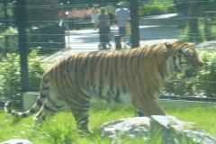 Tierpark Straubing mit Flutopferkindern 009